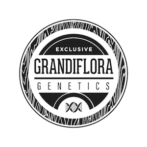 Grandiflora%20 %20exclusive%20png