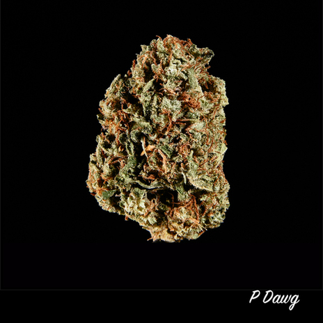 P Dawg - Mendocino Greenhouse