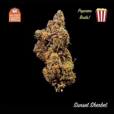 Sunset Sherbet Popcorn Buds
